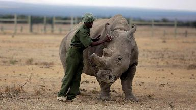 Northern white rhino 'could be saved from extinction'