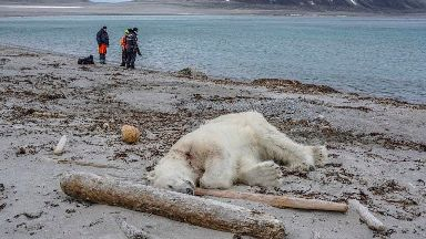 Cruise ship guards 'tried to scare polar bear away before killing it'