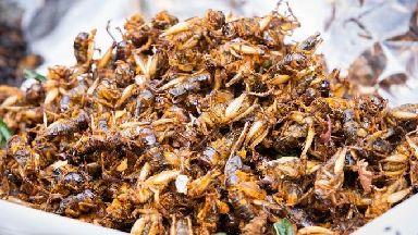 Fried crickets.