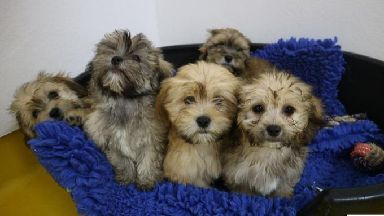 All of the dogs will need to be vaccinated, neutered and microchipped before being rehomed in Ireland.