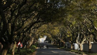 Trees line a street in a Johannesburg suburb.