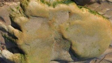Dinosaur footprint: Found near Inverness.