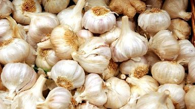 Could garlic be the answer to beating antibiotic resistance?