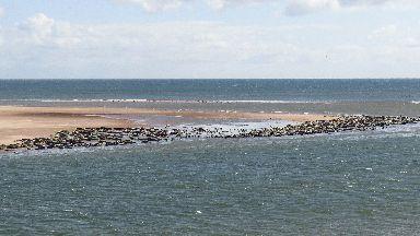 Seal stampede on Ythan beach