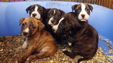 One in three puppies bought online die or fall ill within a year