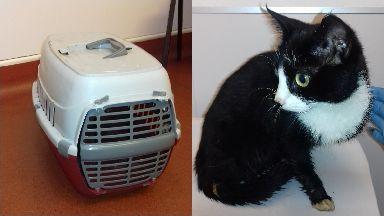 Cat: She was found inside a plastic carrier. Burntisland Fife