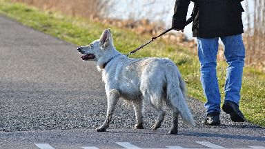 Dog on a lead, being walked by owner, generic image
