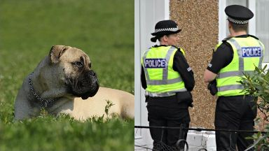 Dog: The six-year-old was seriously injured.