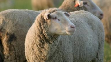 Inverness sheep dip discharge farmer fined