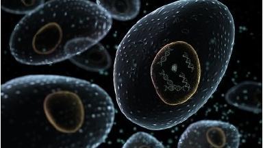 Edinburgh scientists create cell division short-cut