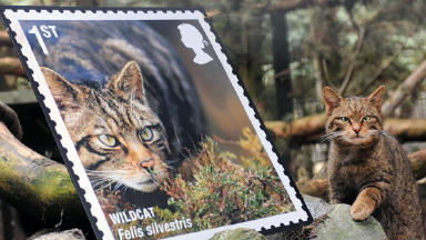 Wildcat Stamps: Only 400 left in wild