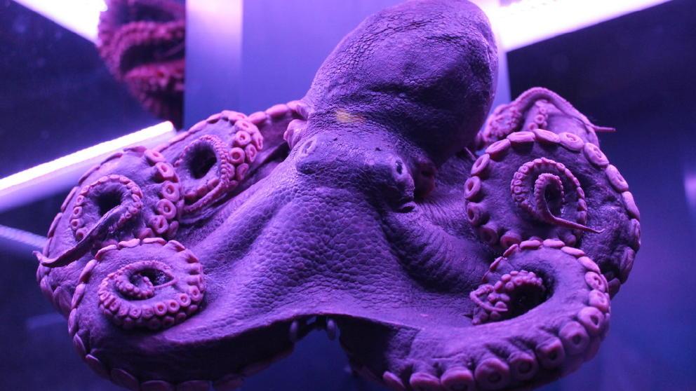 Sea Creature 3