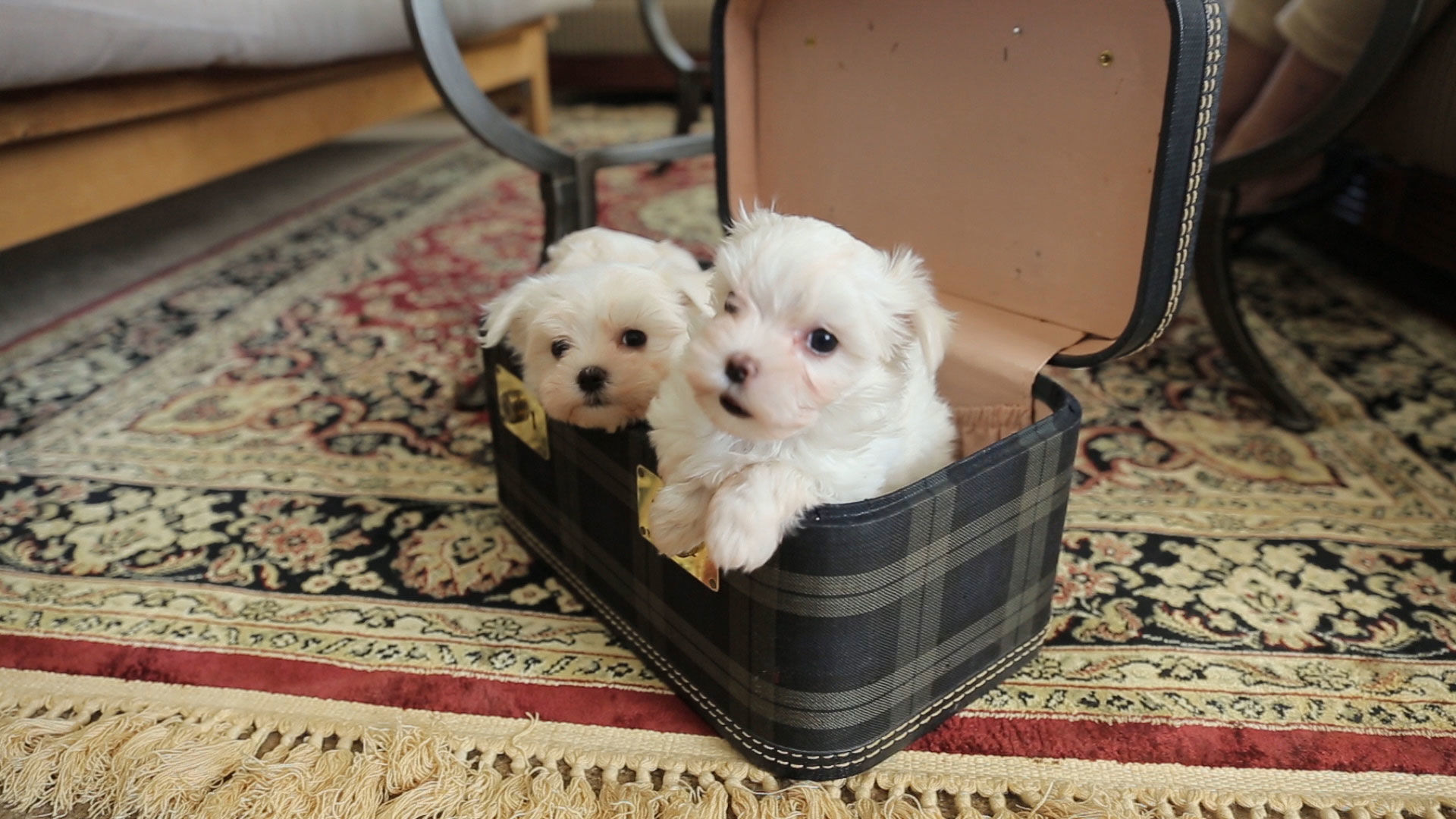 The Pet Collective: Puppy Love