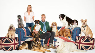 Britain's Top 100 Dogs Live 2019