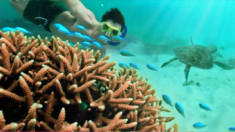 Great Barrier Reef - Part 1