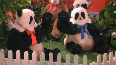 Ant & Dec Become Pandas Again!