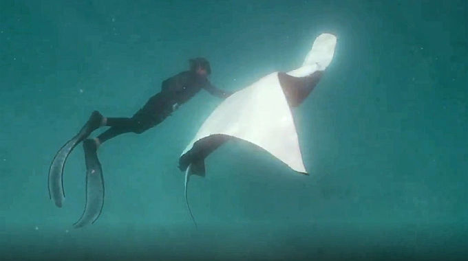 This Morning - The man who was recognised by a Manta Ray